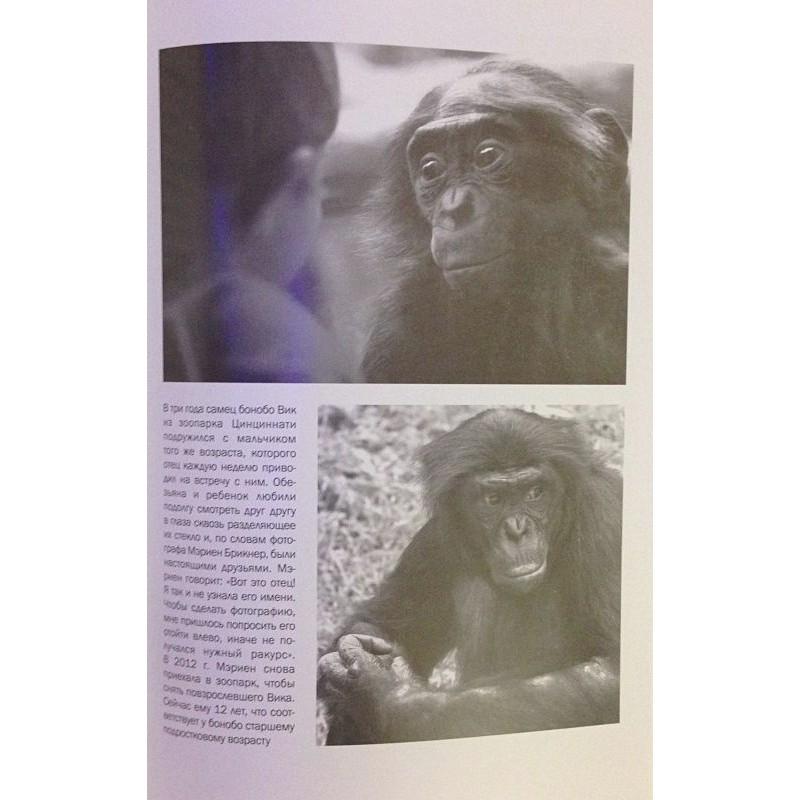 Истоки морали. В поисках человеческого у приматов (фото 8)