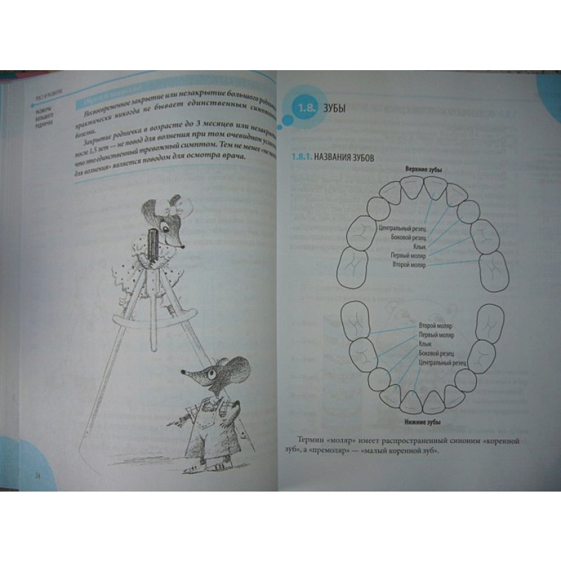 Справочник здравомыслящих родителей (фото 5)