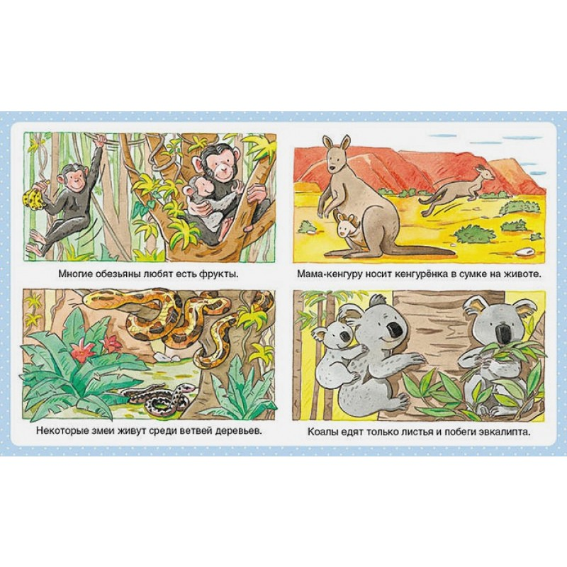 Животные (до 3-х лет, пухлая обл., импорт) (фото 5)