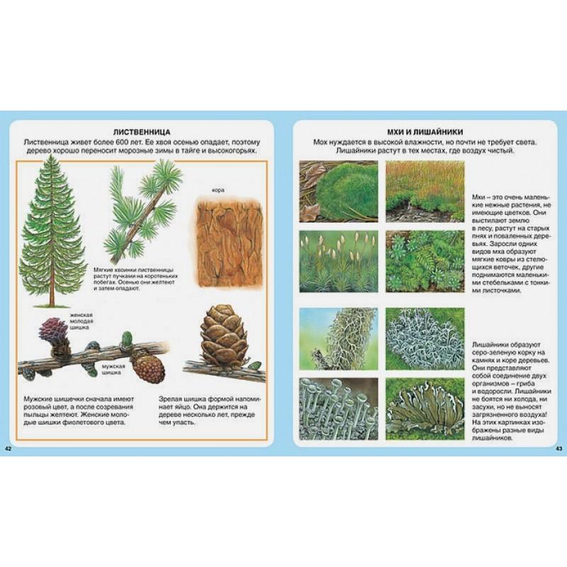 Жизнь леса (нов.оф.) (фото 3)